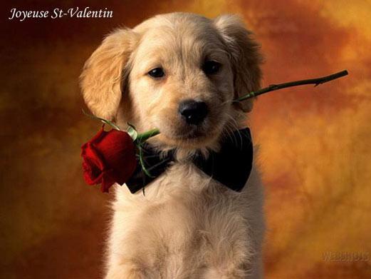 toutou-rose-st-valentin.jpg