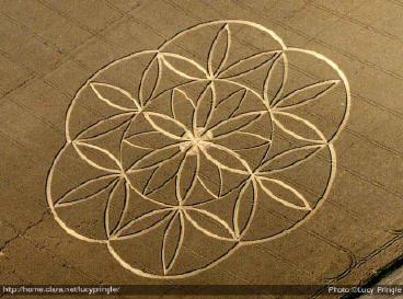 La Fleur de Vie Fleur-de-vie-crop-circle-08