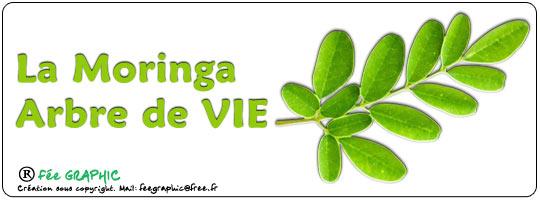 Le Moringa ou arbre de Vie :-)